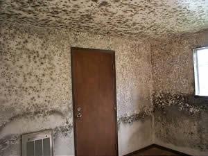 schimmelpilz schimmelgutachten schimmelgutachter bausachverst ndiger schimmelprobleme. Black Bedroom Furniture Sets. Home Design Ideas